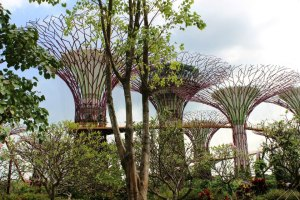 gardens by the bay (14)