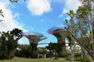 gardens by the bay (17)